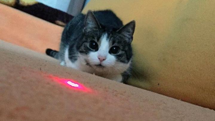 Resultado de imagen para gatos laser